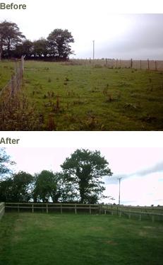 Reinstating Pasture Land
